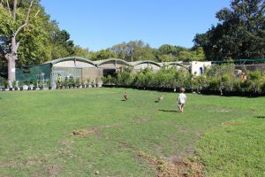 Ferndale Nursery